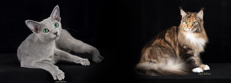 Mostra Internazionale Felina di Acqui Terme (AL)